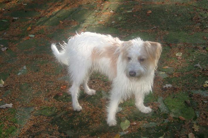 Der etwas andere Hund – ein Kromfohrländer!