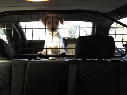 Gefangener Kromi im Auto