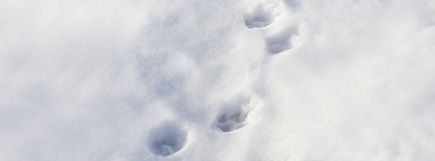 Pfötchenabdrücke im Schnee